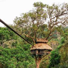 Gibbon Experiense Laos